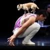 Christian Stoinev & Scooby, Hand Balancer